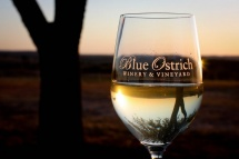 blue ostrich winery